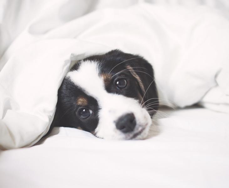 Como dormir toda la noche